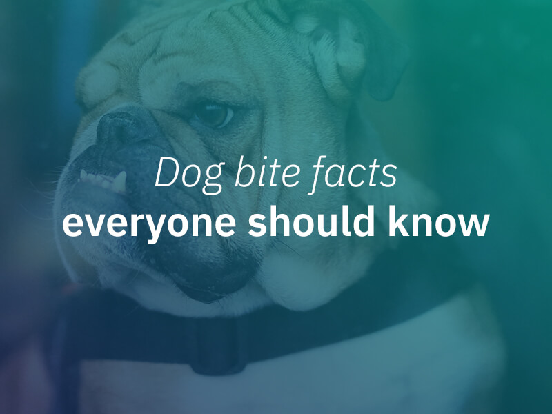 Dog bite facts